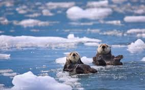 sea otters other s background