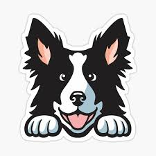 Border Collie Stickers Redbubble