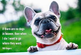funny dog quotes and sayings my dog s