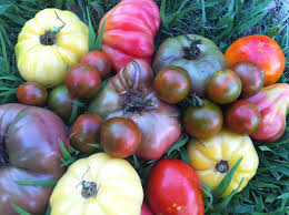 five tomato growing tricks you need to