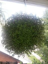 Hermosa planta de afro | Plantas