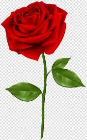 وردة حمراء التوضيح الوردة الزرقاء وردة حمراء Png