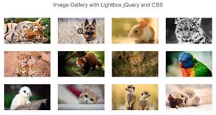 image gallery with magnify icon using