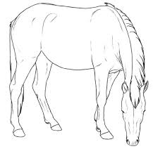 Kids N Fun Kleurplaat Paarden Rassen Mustang Merrie