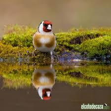 Resultado de imagen de La simetría de la Naturaleza
