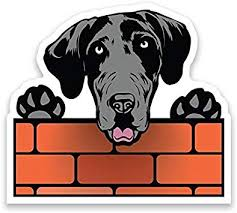 Amazon Com More Shiz Great Dane Dog Peeking Over Wall Vinyl Decal Sticker Car Truck Van Suv Window Wall Cup Laptop One 6 5 Inch Decal Mks1245 Automotive