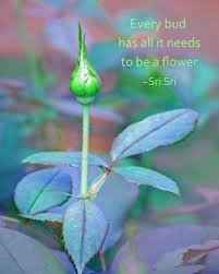beauty break flower quotes amazing flowers rose buds