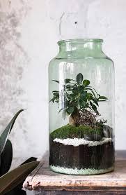 15 plants in terrariums