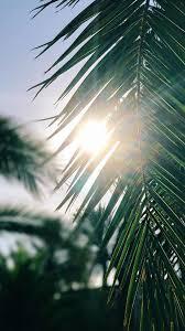 tropical summer desktop wallpaper