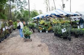 mercer botanic garden host grand re