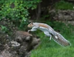 Squirrel Week 2019 Here Are The Winners Of The Squirrel Week Photo Contest The Washington Post