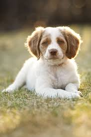 the 25 cutest dog breeds most