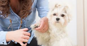 15 best nail clippers for dogs must