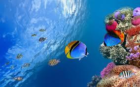 ڈاؤن لوڈ اتارنا خلفيات متحركة حوض سمك الصور المتحركة للاسماك