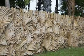 Palm Leaves Fence Northern Province Sri Lanka Stock Photo Download Image Now Istock