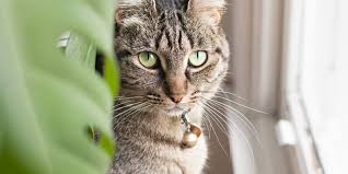 plants that are toxic to cats dogs