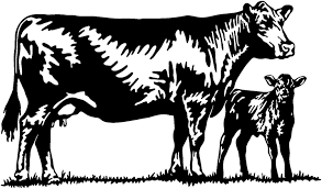 For Cattle Decal Livestock Ranch Cow Bull Window Stickers Die Cut Vinyl Decal For Windows Cars Trucks Laptops Car Stickers Aliexpress