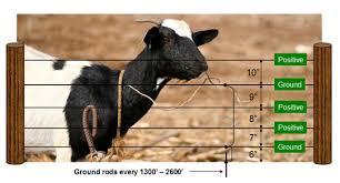 Electrobraidfence Com Goat Fences