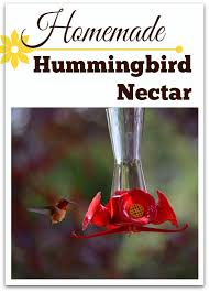homemade hummingbird food nectar