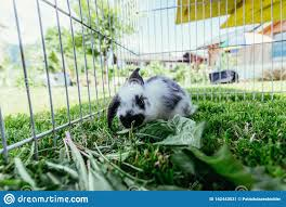 Cute Little Bunny Is Eating Salad Outdoor Compound Green Grass Stock Image Image Of Fluffy Fence 142443631