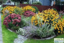 rain gardens cedar grove organic