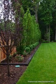 Purple Tree And Border Along The Back In Front Of The Cedars To Keep Mulch In And Grass Privacy Fence Landscaping Large Backyard Landscaping Fence Landscaping