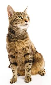 renal ts for veterinary patients