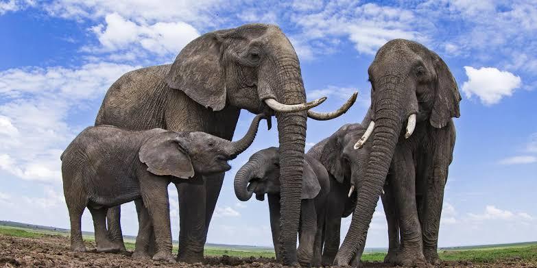 """ผลการค้นหารูปภาพสำหรับ elephant"""""""