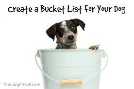 Create A Bucket List For Your Dog.