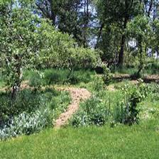 plant an edible forest garden organic