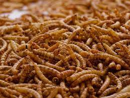 1 Litre Dried Mealworms | Buy Dried Mealworms Online UK | Chubby Mealworms