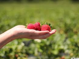 فراولة تنزيل خلفية Hd
