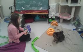 Kids Reading Event At Griffin Pond Shelter Held To Enrich Cats Lives Abington Journal