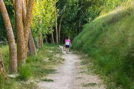 高山樹在西班牙庫存照片. 圖片包括有峰頂, 橫向, 公園, 本質, 迅速 ...