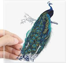 Amazon Com Cafepress Vintage Peacock Sticker Square Bumper Sticker Car Decal 3 X3 Small Or 5 X5 Large Home Kitchen