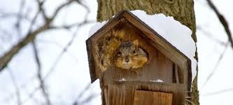 homemade recipes for squirrel repellent