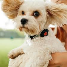 Barks And Bytes The Rise Of Wearable Tech For Pets Pets The Guardian