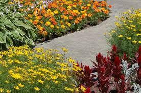 edging plants for your landscape