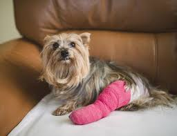 how to care for your dog s torn toenail
