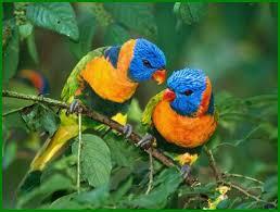 Two Tropical Blue Head Parrot Birds Et Buy Online In Guernsey At Desertcart