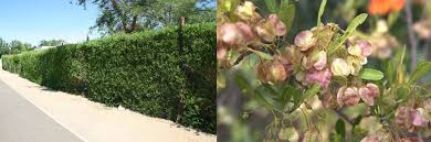 top 10 trees to plant in a small garden