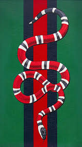 gucci snake wallpapers top free gucci