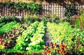 florida vegetable garden love life info
