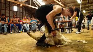 Irish shearer Ivan Scott breaks Kiwi Dion King's world record ...