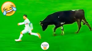 8 مواقف مضحكة في كرة القدم لحيوانات دخلت الملاعب Youtube