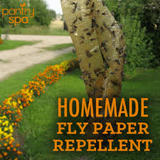 house fly repellent recipe