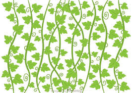 ivy vine vector free vectors
