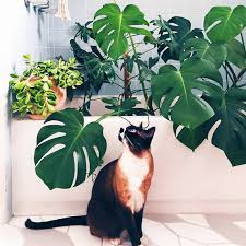 these 11 indoor plants are safe for pets