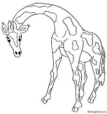 Giraffe Kleurplaten Kleurplaten Eu
