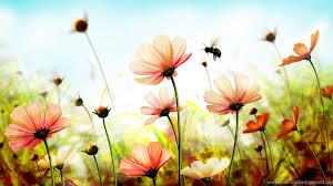 nature flower wallpaper 50 images